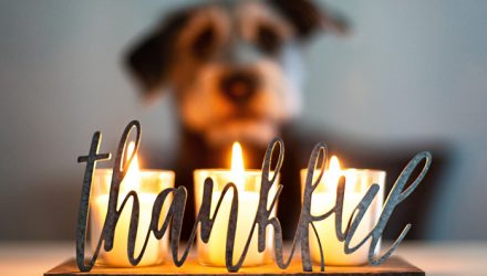 Why Investors Should Be Thankful