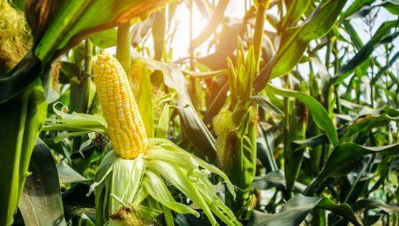 Agriculture ETFs Strengthen on USDA Crop Report, Trade Deal Hopes