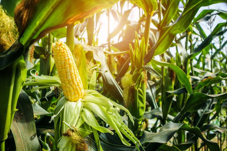 Agriculture ETFs Strengthen on USDA Crop Report, Trade Deal Hopes