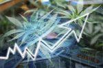 Cannabis ETFs Pop Off on Stellar Organigram Quarterly Report