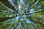 Recent Data Shows ESG Investing Will Be Here to Stay
