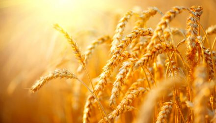 Wheat ETF Spikes on Heavy Trading in Response to Supply Concerns