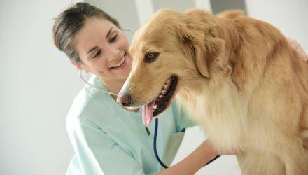 Coronavirus Pandemic Powers Pet Care ETF