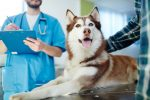 Pet Care ETF Proves Remarkably Durable in Rough Market