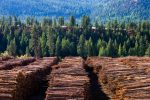 Timber ETFs Grow on Recovering Lumber Demand