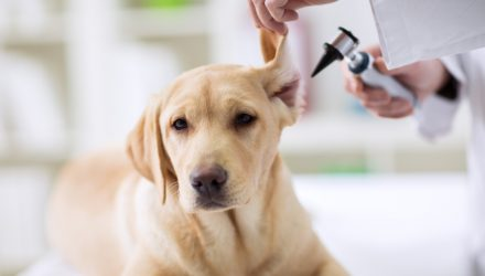 Pet Care ETF Proves Potency in 2020