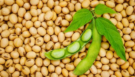 Soybean ETF Activity Spikes as Traders Ready for High Chinese Demand