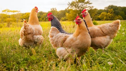 Will A Bargain Priced Tyson Foods Lift These ETFs?