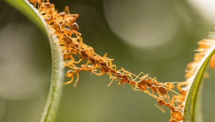 ANTs Offer Unique Structure, New Active Approach