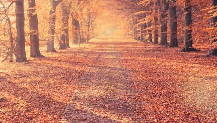 Autumn… The Season of Second Chances