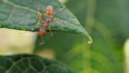 New ANT Could Be Alluring Mid-Cap Idea