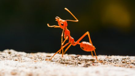 Taking a Big Look at an Original ANT
