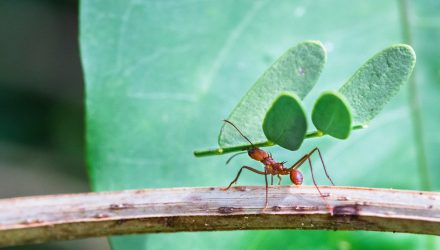 Turning to ANTs to Defeat Front-Runners