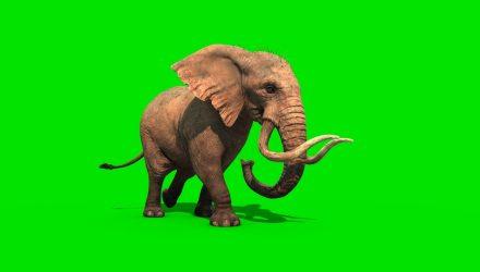 Who Bombed the Elephant?