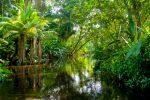 ETFs in the Amazon Jungle