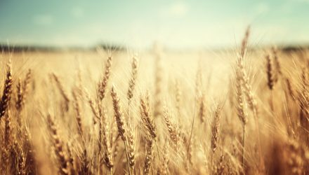 Wheat ETF Grows as Drought Conditions Decimate Supply