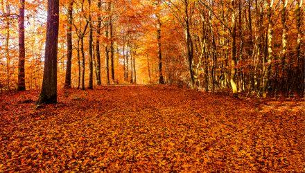 Golden November - so far