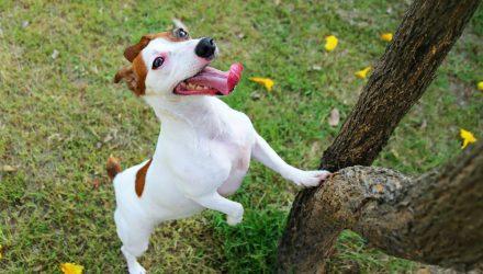The ProShares PAWZ ETF: Barking Up the Right Tree