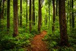 Timber ETFs and Housing Demand Reaching New Heights