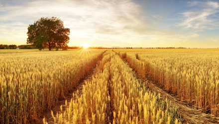 Agricultural ETFs Continue To Gain As Crop Supply Is Limited