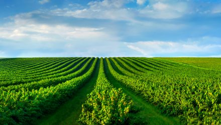 Agricultural ETFs Rocket Amid Crop Report Revisions