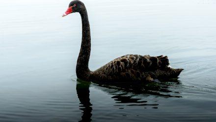 2020, Black Swans Everywhere!