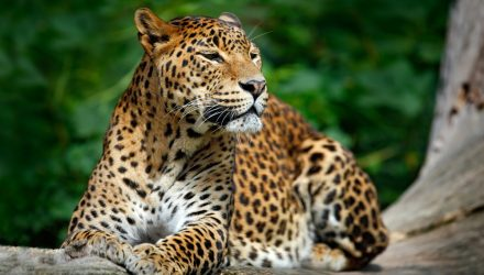 With 'SPLV', the Leopard Does Not Change Its Spots