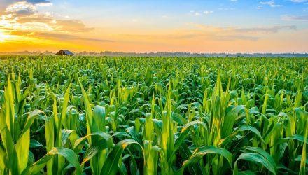 Agriculture ETFs Surge Following Surprise USDA Report