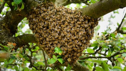 Join the Swarm: Invest in the Power of Collective Conviction