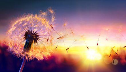 Freedom – the Foundational ESG Factor