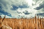 Grains ETFs Snag a Boost from Chinese Demand, Weather Concerns