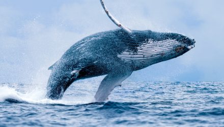 The Whale of Retail: Investing in E-Commerce