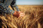 Grains ETFs Rally on Supply Concerns