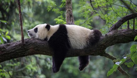 Have Regulatory Concerns Made You More Bearish on China?