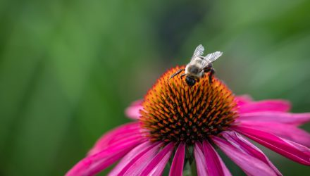 Drastic Droughts Leave Bees Stricken, Crops to Suffer