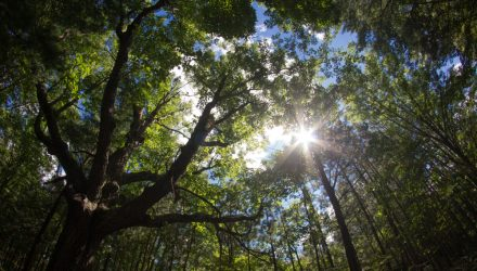 Michigan to 'Harvest' its Forests by Protecting Them for Carbon Offsets