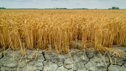 Corn and Wheat Prices to Continue Rising in the Midst of Drought