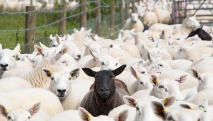 Don't Follow the Herd in Emerging Markets