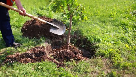 Planting Trees Isn't Enough to Curb Output From Emissions